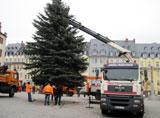 Weihnachtsbaum Menzl